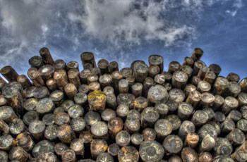 Tipos de madera: maderas para la construcción